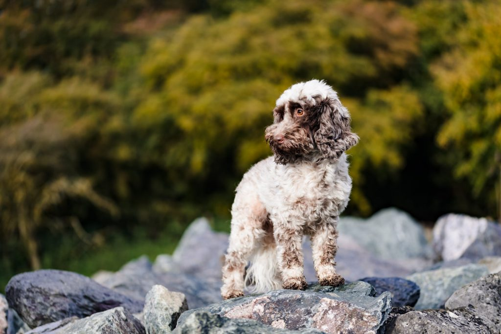 Rutland Pet Photography Outdoor Pet Portrait (1)