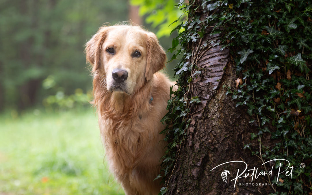 Rutland Pet Photography is now outdoors only